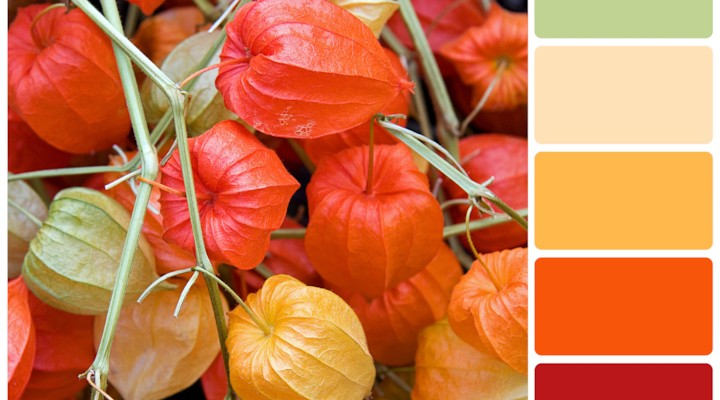 Sunrise Pepper {Color Palette Monday}
